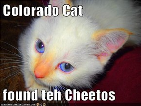 Colorado Cat  found teh Cheetos