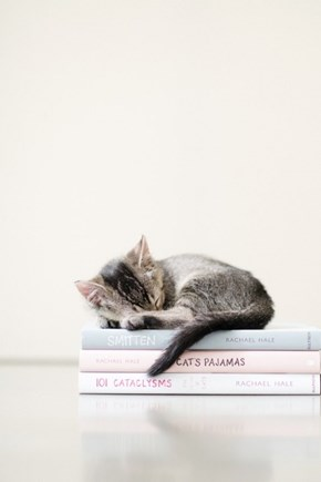 Cyoot Kitteh of teh Day: Reading is Exhausting