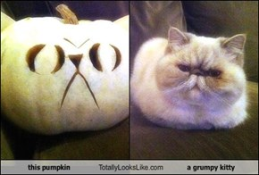 this pumpkin Totally Looks Like a grumpy kitty