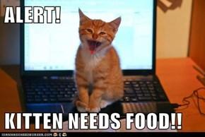 ALERT!  KITTEN NEEDS FOOD!!