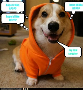 Dogs with orange sweater