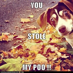 YOU STOLE  MY POO !!