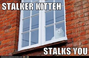 STALKER KITTEH  STALKS YOU