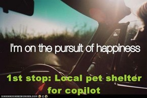 1st stop: Local pet shelter for copilot