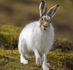 Creepicute: Wild Hare