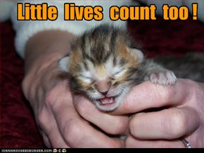 Little  lives  count  too !