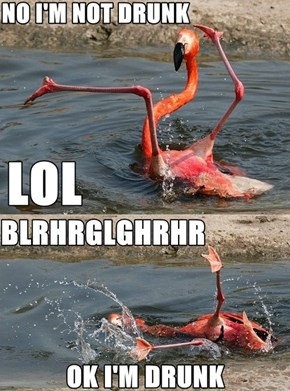 Flamingo, I Think You've Had Enough
