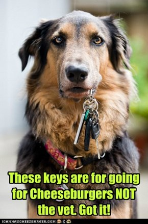 These keys are for going for Cheeseburgers NOT the vet. Got it!