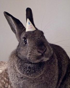 Bunday: Birthday Bun