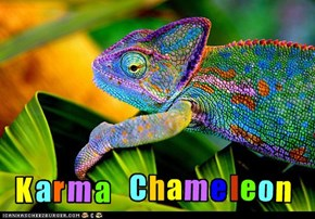 Karma Chameleon...who may or may not have found a peyote plant