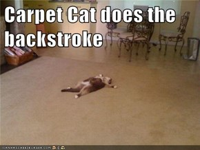 Carpet Cat does the backstroke