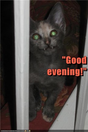 """Good                                               evening!"""