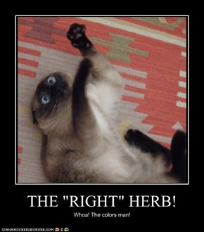 "THE ""RIGHT"" HERB!"