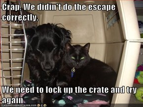 Crap. We didin't do the escape correctly.  We need to lock up the crate and try again