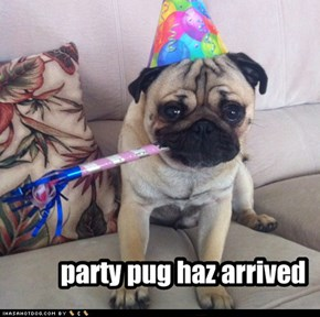 party pug haz arrived