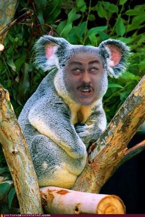 Koala Derp