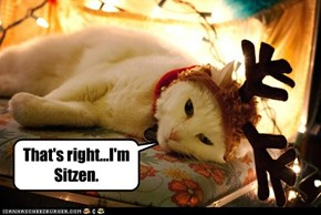 The lazy reindeer