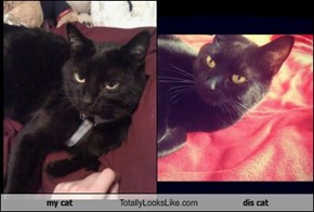 my cat Totally Looks Like dis cat