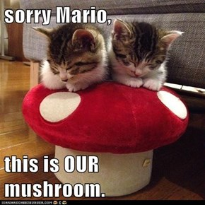sorry Mario,  this is OUR mushroom.
