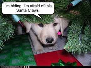 Frightened Christmas Puppy