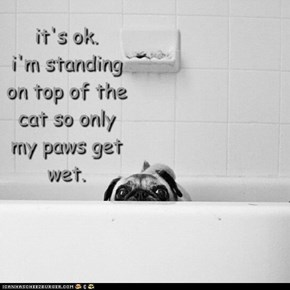 it's ok. i'm standing on top of the cat so only my paws get wet.