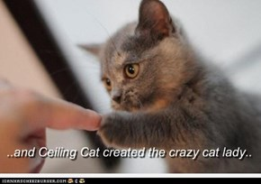 ..and Ceiling Cat created the crazy cat lady..