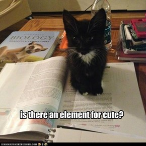 element of cuteness