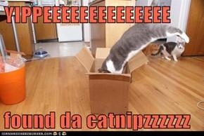 YIPPEEEEEEEEEEEEEE  found da catnipzzzzzz