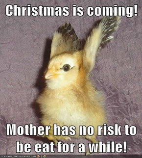 Christmas is coming!  Mother has no risk to be eat for a while!