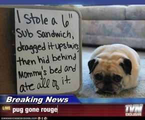 Breaking News - pug gone rouge