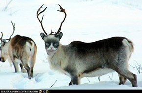 The Most Grumpy Reindeer of All