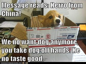 Message reads: Herro from China!   We no want dog anymore, you take dog off hands. He no taste good.
