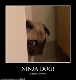 NINJA DOG!