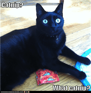 Catnip?  What catnip?