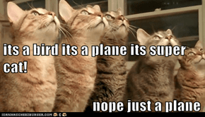 its a bird its a plane its super cat!                                nope just a plane