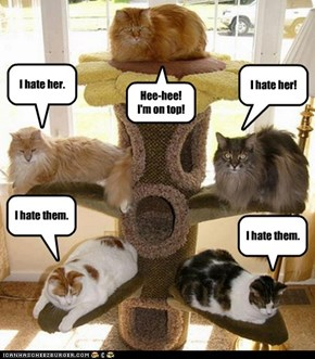 Mrs. Catlady fondly believed their new cat tree brought her kittehs closer together.