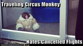 Traveling Circus Monkey  Hates Cancelled Flights