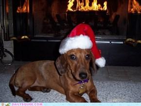 Sadie Claus