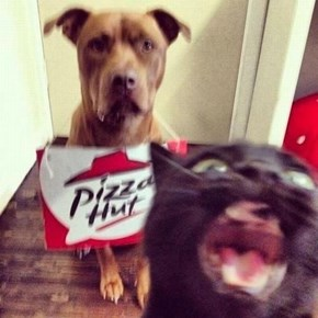 Goggies R Owr Friends: Pizza Party!
