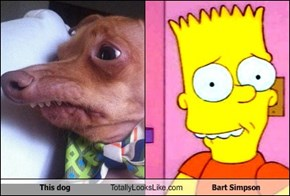 This dog Totally Looks Like Bart Simpson