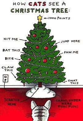 How Cats See a Christmas Tree