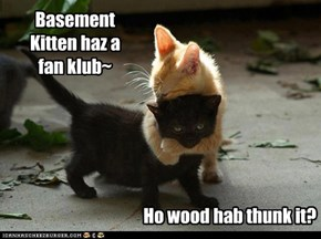 Basement Kitten haz a fan klub~
