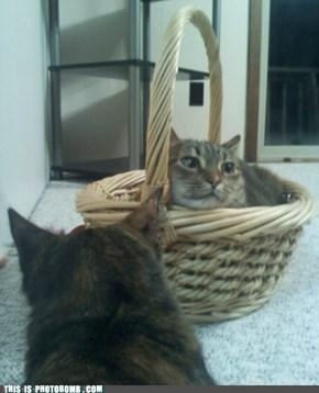 Reverse Cat Photo Bomb