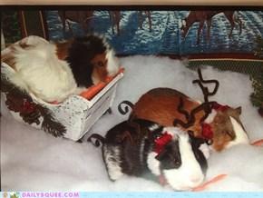 It's a Piggy Christmas!