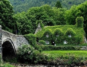 A Home For The Ivy Too