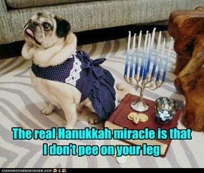 The real Hanukkah miracle is that  I don't pee on your leg
