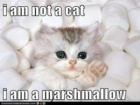 i am not a cat   i am a marshmallow