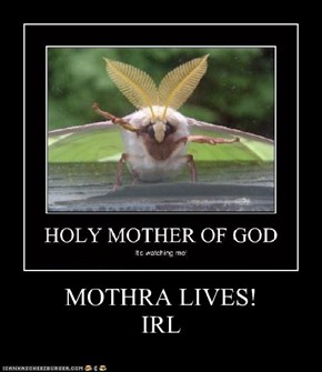 MOTHRA LIVES! IRL