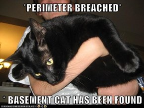 *PERIMETER BREACHED*   * BASEMENT CAT HAS BEEN FOUND