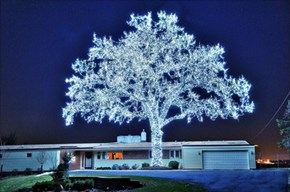 Holiday Lights WIN